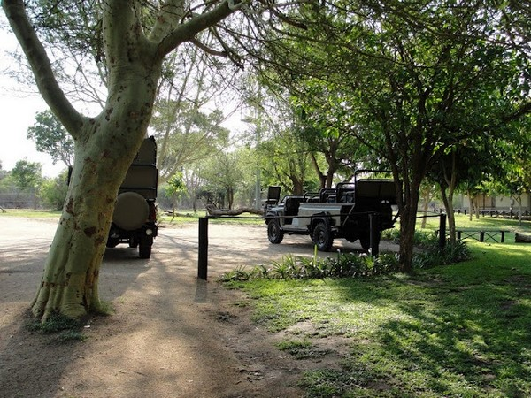 safari no kruger park africa do sul
