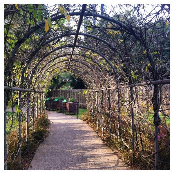 Jardim Botânico de Curitiba - Preciso Viajar