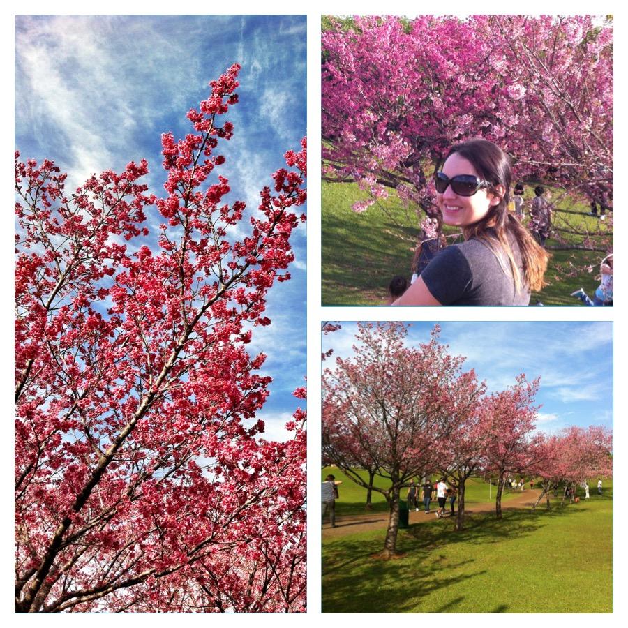Florada das cerejeiras