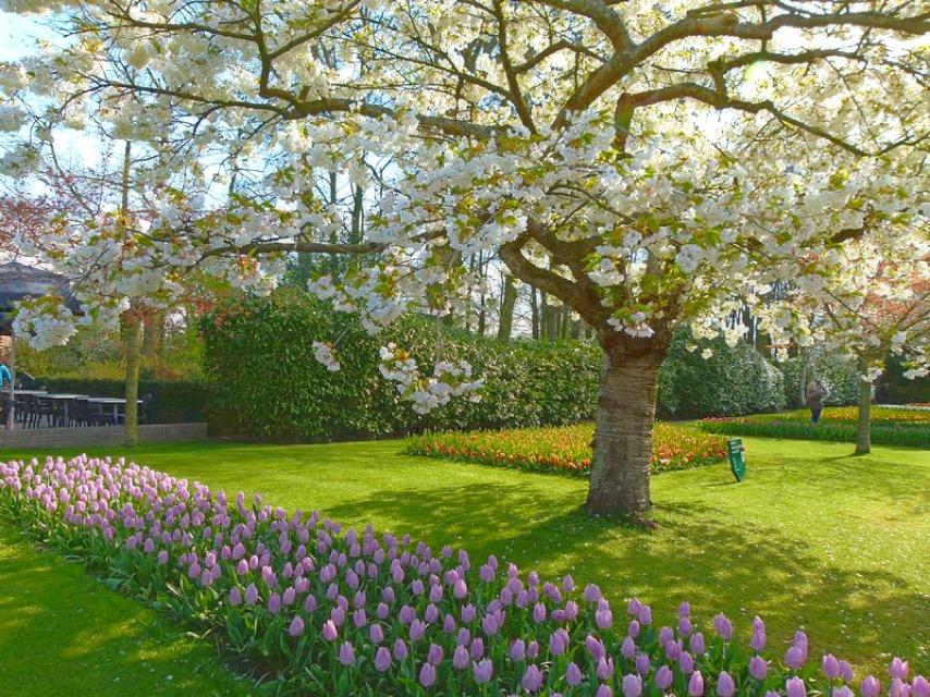 Outra vantagem de abril são as cerejeiras